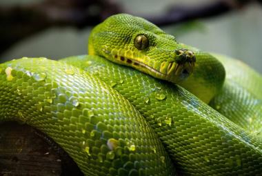 Hady užovkovité
