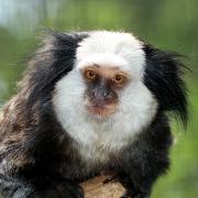Pre opičky