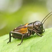 Pre kŕmny hmyz