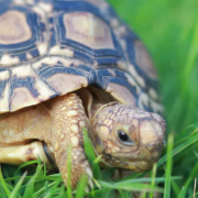 Pre korytnačky