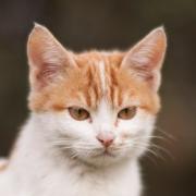 NEKTON - mačky